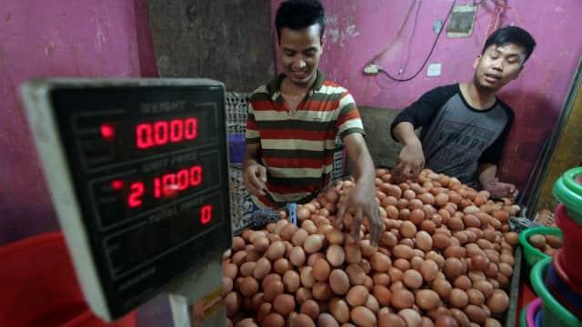 Di Papua Barat, Harga Telur Ayam Rp 50.000 per Kg