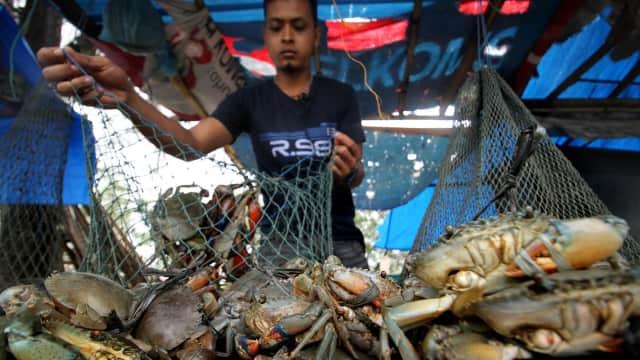 Tangkap 2,7 Kg Kepiting, Warga Samas Ditetapkan sebagai Tersangka