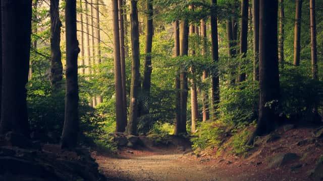 Jangan Penjarakan Petani Hutan