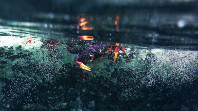 Habitat Kepiting dan Udang di Gunungsewu Jadi Korban Siklon Cempaka