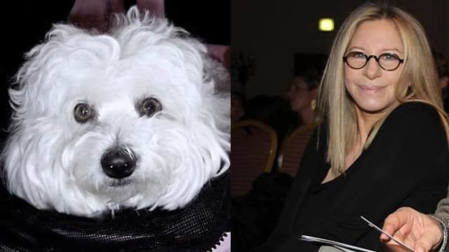 Penyanyi Barbra Streisand Mengkloning Anjingnya yang Sudah Mati