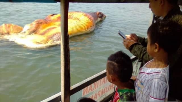Paus yang Mati di Probolinggo Diduga Kena Sayatan Baling-baling Kapal
