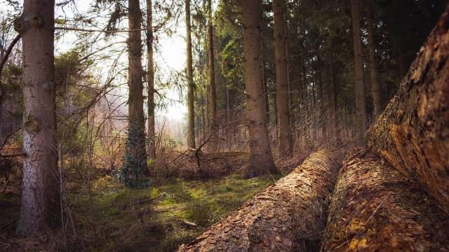 Cara Menggunakan Pohon sebagai Penunjuk Arah