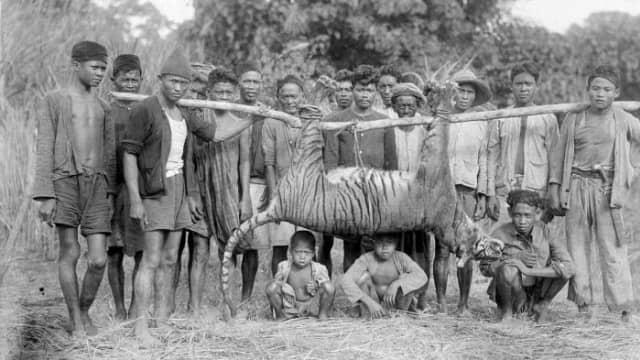 Jejak Harimau yang Dinyatakan Punah di Tanah Jawa