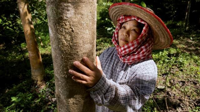 Brand Kecantikan Clarins Dukung Petani Kopi di Sumatra