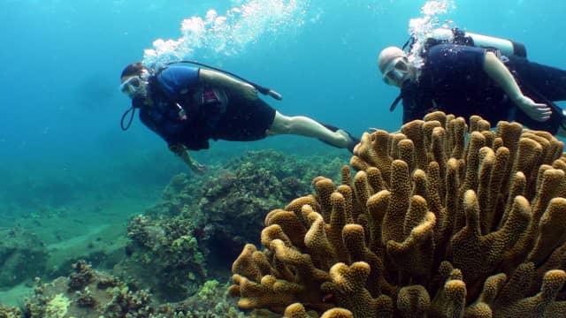 Amerika Akan Buka Museum Bawah Laut Pertama di Bulan Juni