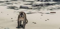 8 Fakta Menarik Seputar Phi Phi Island yang Belum Tentu Kamu Tahu