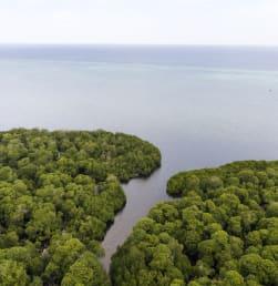 Keindahan Hutan Mangrove di Kaledupa, Wakatobi