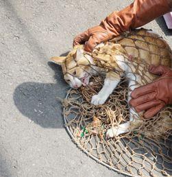 Menekan Populasi Kucing Liar di Jakarta
